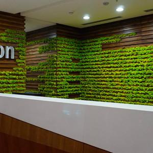 vertical green Amazon